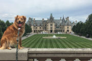 Happy Tails tours Biltmore Estate Tour