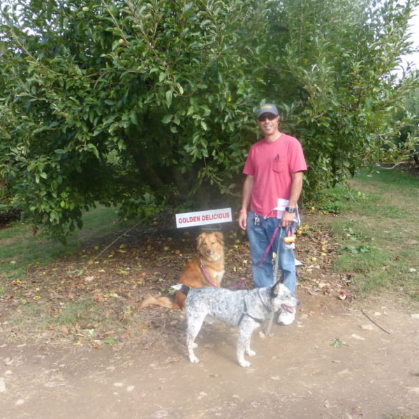 Dog tours in Apple Orchard Yadkin Valley