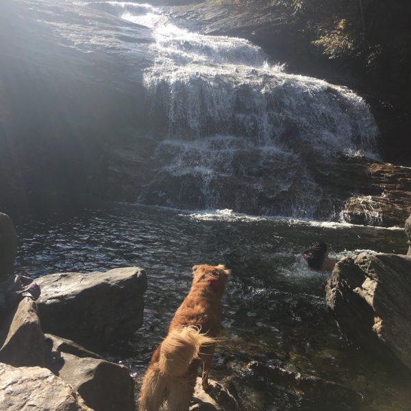 Dog looks over waterfalls