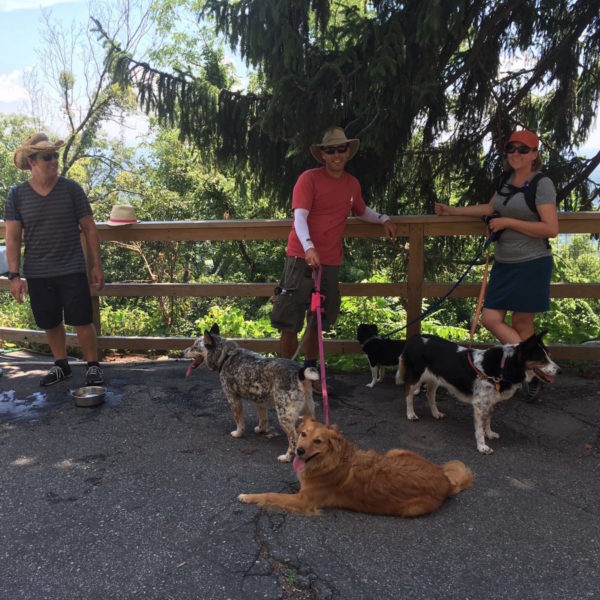 Traveling with your dog in Asheville Chimney Rock State Park Hike