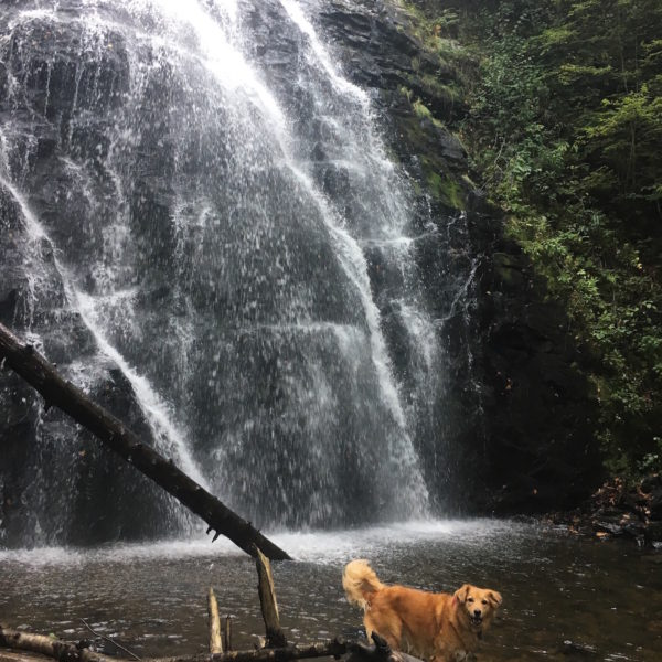 A dog playing by the waterfalls in Crabtree Falls