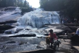Dogs enjoying a great adventure tour at a waterfall in Asheville