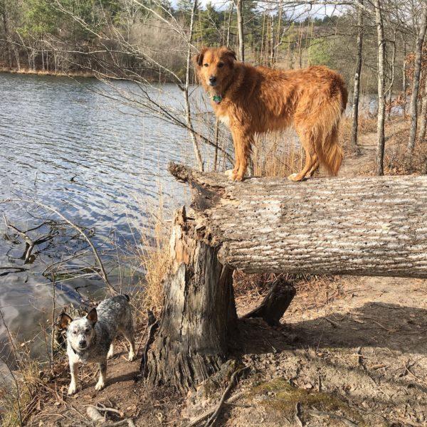 Lake dogs hiking