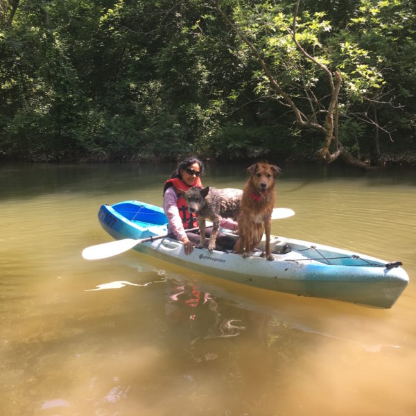 Kayak with your dog tour in asheville Charlotte