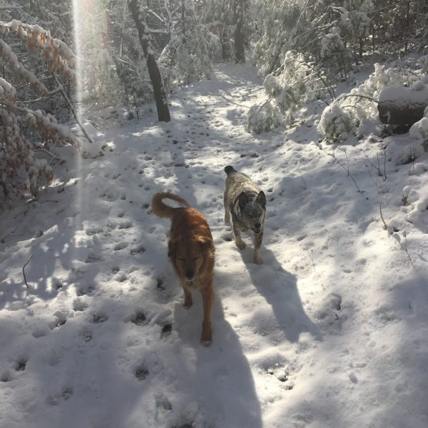 Dogs hiking in snow