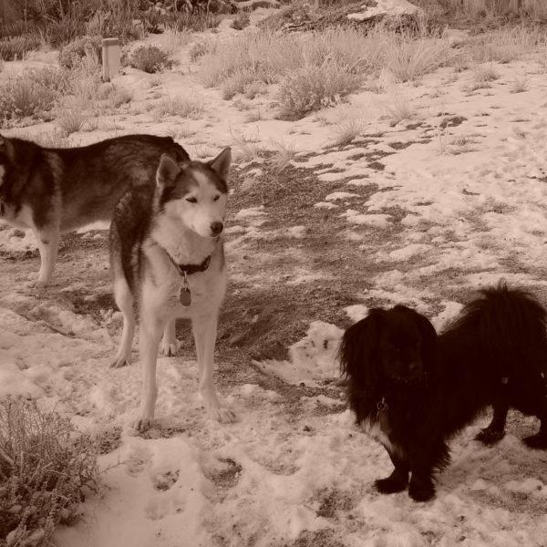 North Carolina New Mexico Melody Dogs Snow