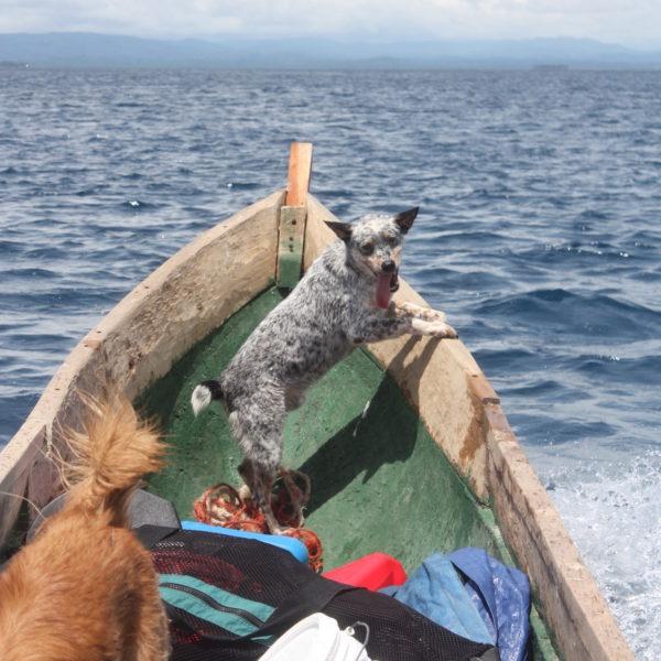 North Carolina Panama Ocean Boat Dozer
