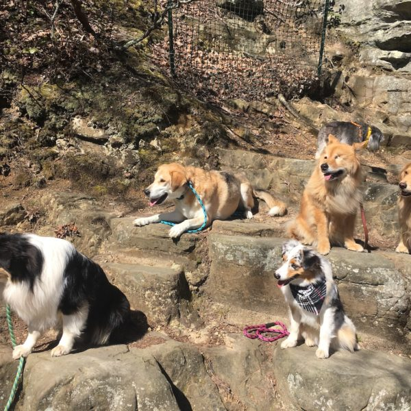 hiking adventure with dogs