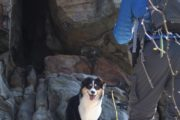 hiking dogs at Yadkin Valley
