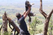 Eric Rivera goes hiking with his dog at Pilot Mountain