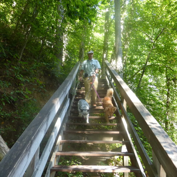 Hiking dogs going down the stairs in Amicalola