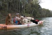 David Blank kayaking with dogs