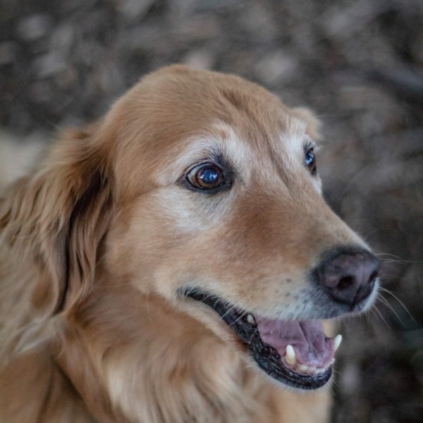 Happy Tails Tours dog 2