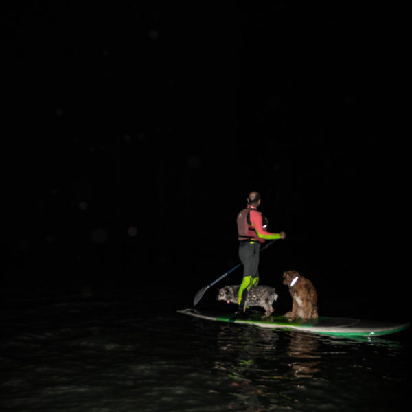 Happy Tails Tours howl at moon tour SUP with dogs