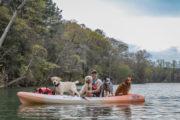 dog outdoor adventures