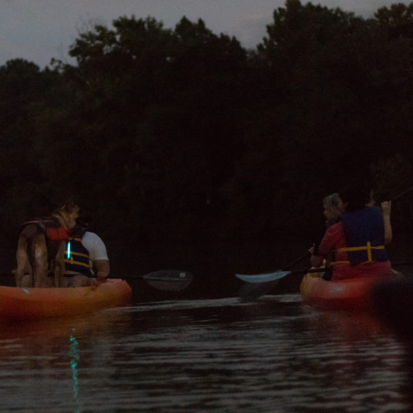 Happy Tails Tours kayaking tour with dogs