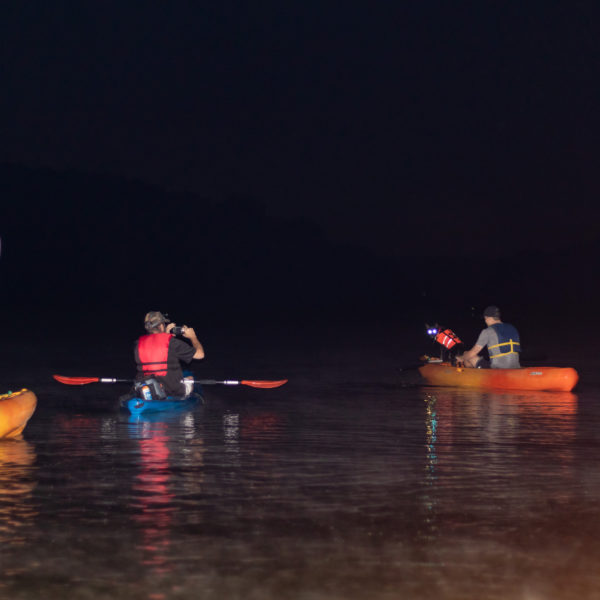 Happy tails tours group kayaking