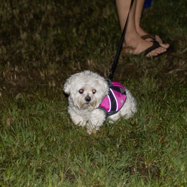Howl at the moon happy tails tours dog photo
