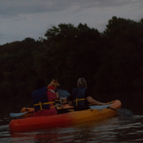 Kayaking with dogs tour