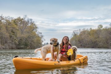 Dogs at the lake kayaking