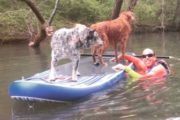 SUP tour with dogs