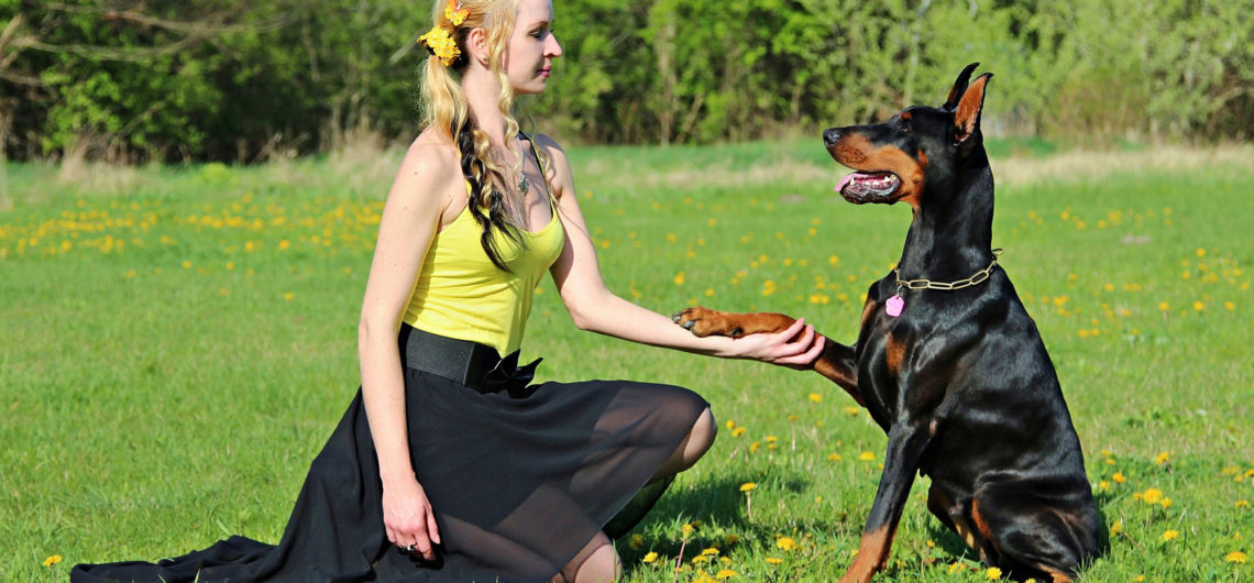 Dog trainer performing mental exercises with dog