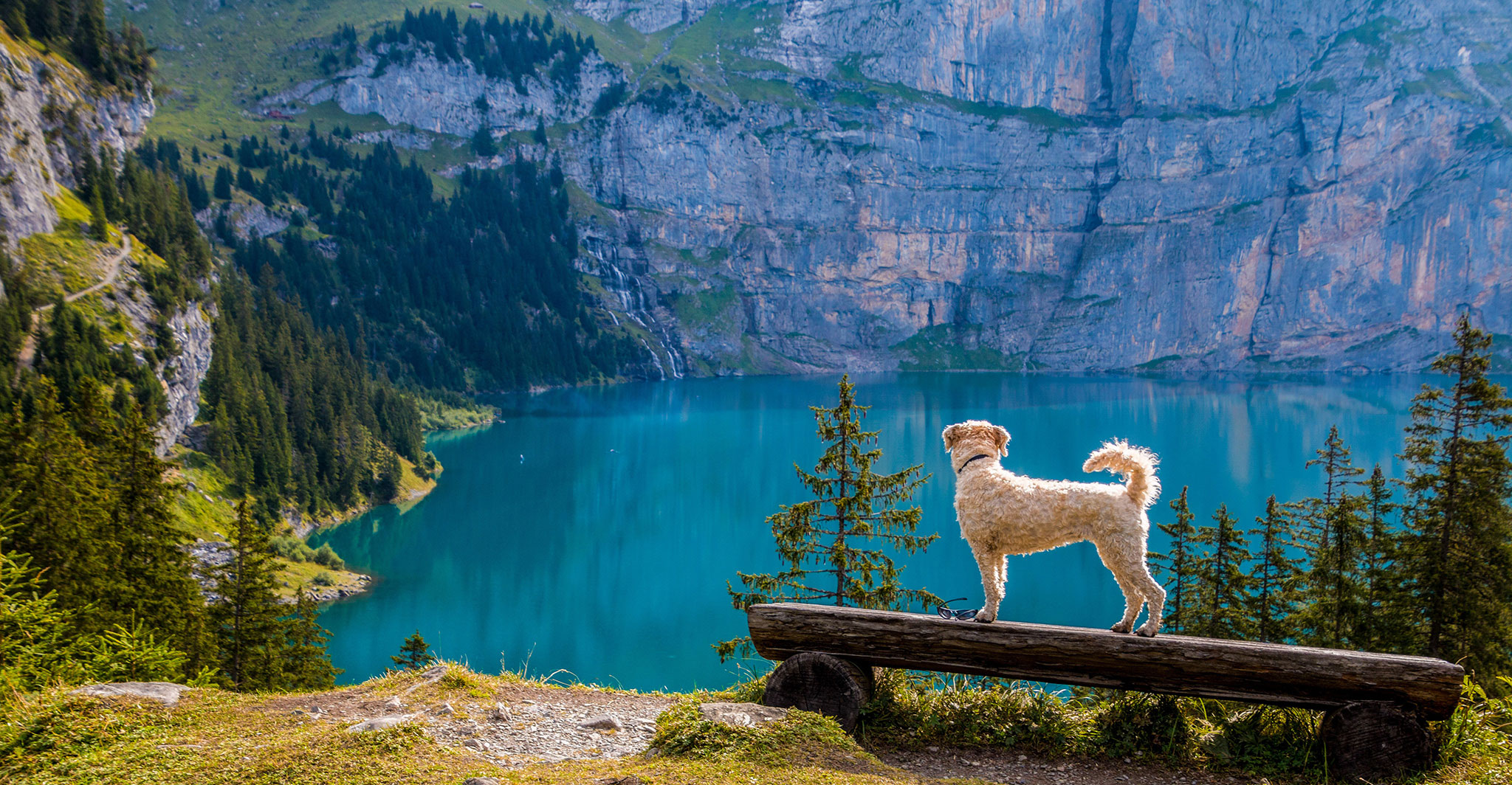 Dog at the lake - outdoor travel