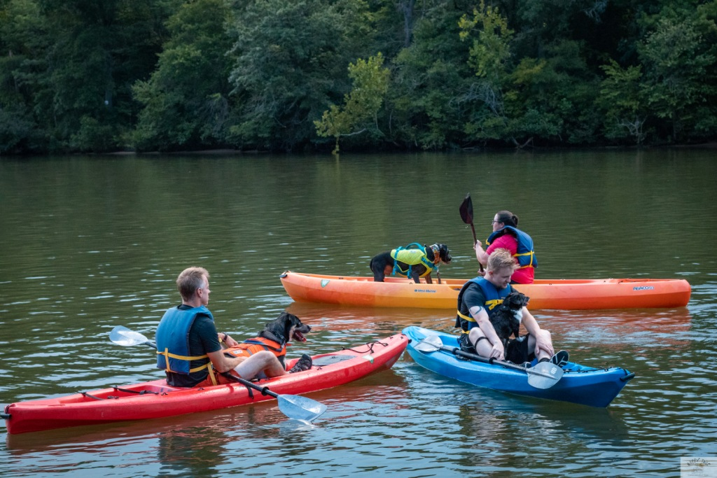 Kayaking with dogs during the Happy Tails Tours Howl at the Moon