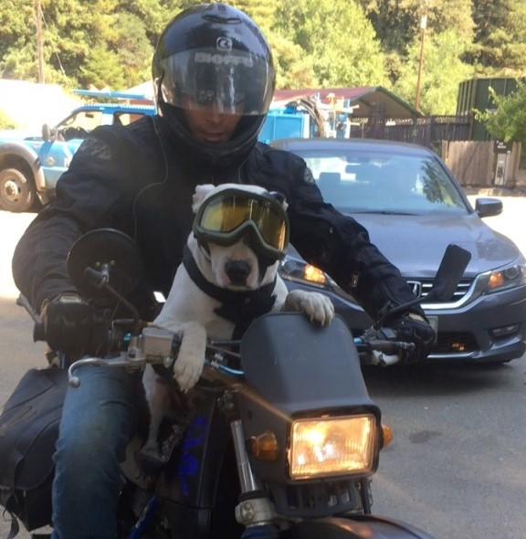 A dog riding a motorcycle