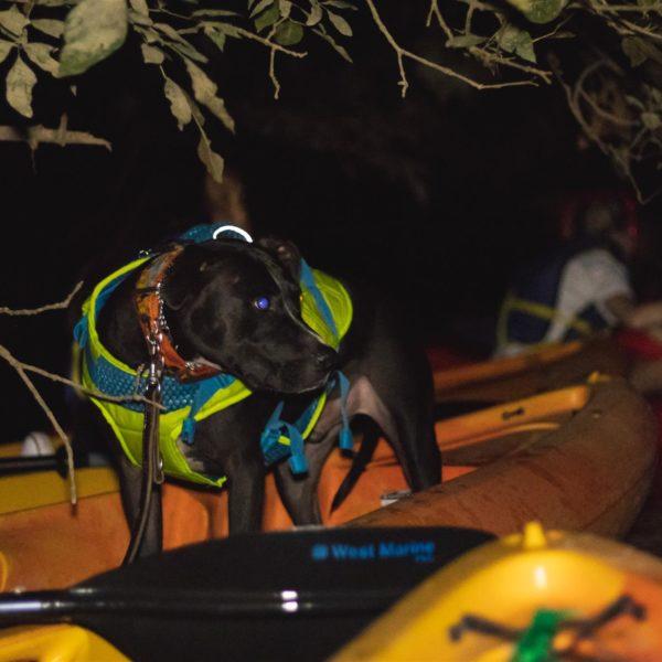 kayaking dogs in Catawba river