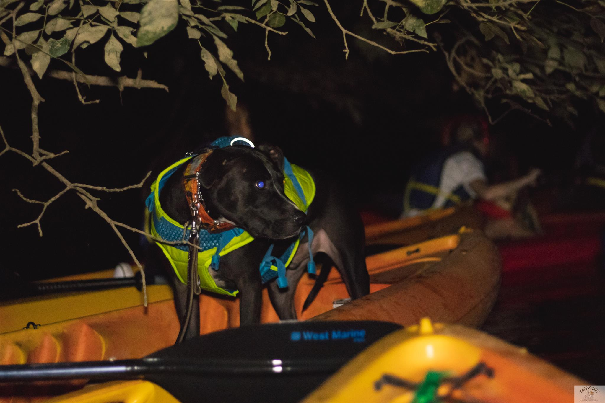 Charlotte Tours: Howl At The Moon - Full Moon Kayak & SUP Adventure