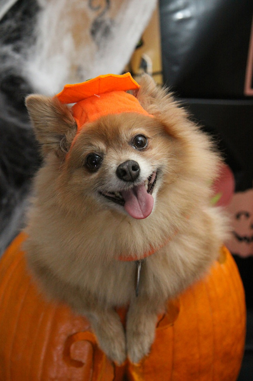 cute dog in a halloween costume