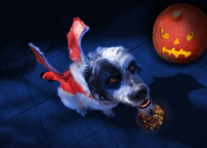dog halloween costume tour event