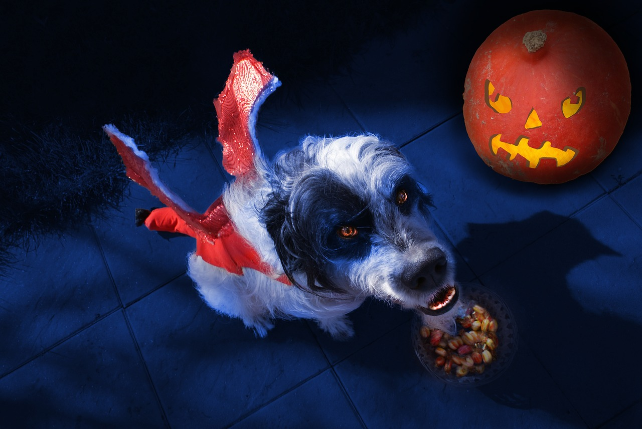 dog halloween custome tour event