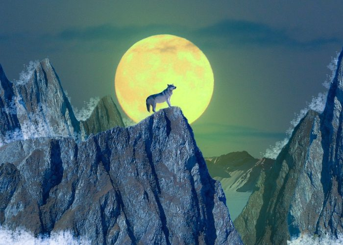 full moon dog mountain tour Halloween