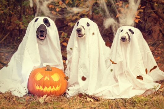 Dog Halloween Event