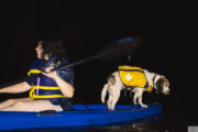best ways to travel with dogs