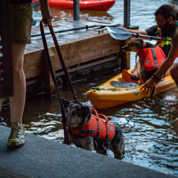 Dogs getting ready to go kayaking