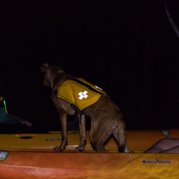 dogs kayaking under the full moon
