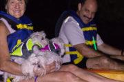 kayaking puppies under the full moon