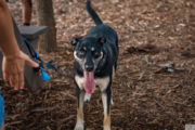 Dog tours at Happy Tails Tours