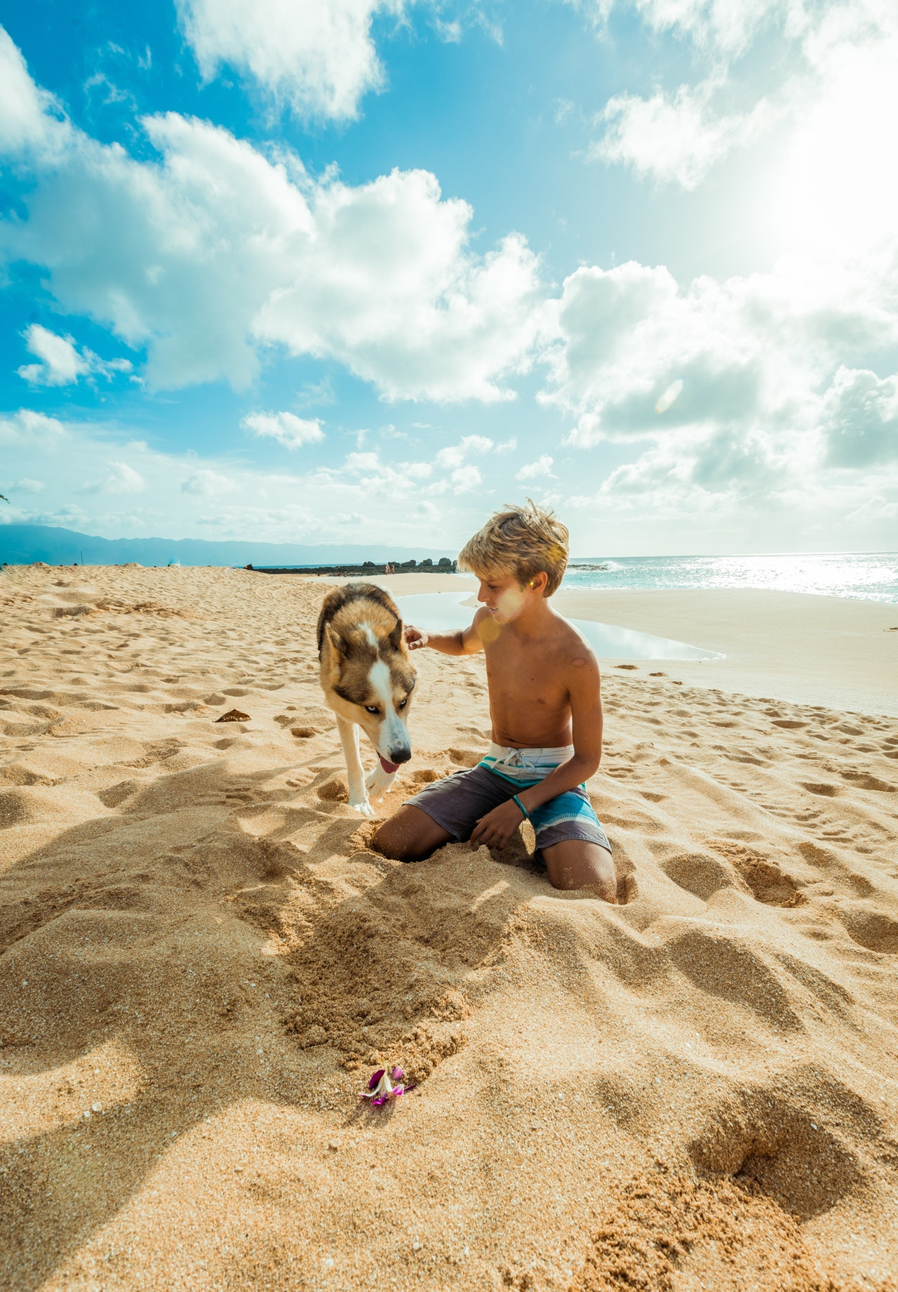 bring your dog to the beach